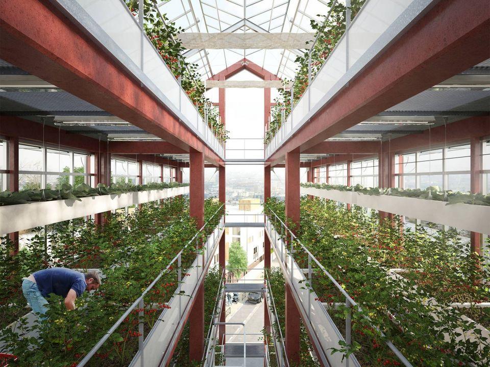 """Проект вертикальной фермы в РоменвиллеКонцепция элегантной городской вертикальной фермы для города Роменвилль во Франции разработана архитектурным бюро Ilimelgo architecture в 2018 году. Конструкция многоярусной фермы-теплицы, предусматривает компактное размещение посевов, максимальное использование естественного солнечного света и естественной вентиляции.Предполагается, что вертикальная ферма будет размещаться непосредственно в пределах городской застройки и круглый год обеспечивать городских жителей свежей зеленью.Здания могут быть выполнены в металлическом или ж.б. каркасе, в качестве ограждающих конструкций будет использовано энергоэффективное остекление. Прямоугольная форма здания с треугольной крышей, с одной стороны, является самой простой в исполнении, а с другой - полностью соответствует окружающей застройке района.В соответствии с концепцией, растения будут выращиваться в модульных контейнерах. Кроме растений на объекте предусматривается разведение кур, а также планируется устройство лаборатории для экспериментов с прорастанием семян.Проект не был реализован, однако послужил вдохновением для ряда разработок в области """"городских"""" аграрных комплексов.#вертикальныефермы #франция"""